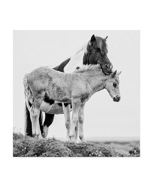 "Trademark Global PH Burchett Black and White Horses I Canvas Art - 27"" x 33"""