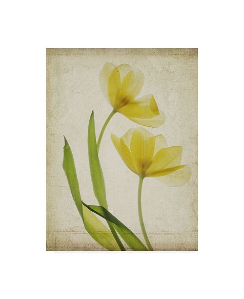 "Trademark Global Judy Stalus Parchment Flowers IV Canvas Art - 37"" x 49"""