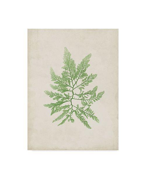 "Trademark Global Vision Studio Peridot Seaweed II Canvas Art - 20"" x 25"""