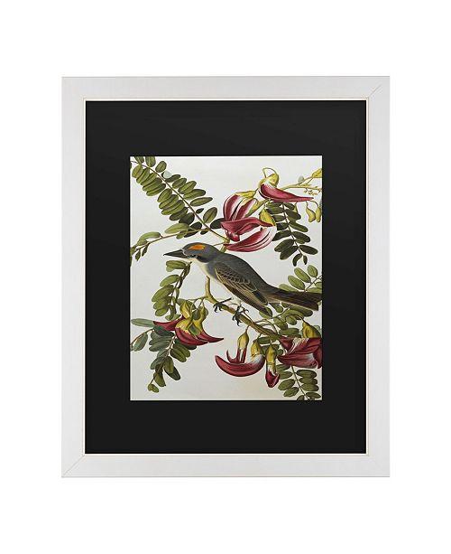 "Trademark Global John James Audubon Gray Tyrant Gray Kingbird Matted Framed Art - 20"" x 25"""