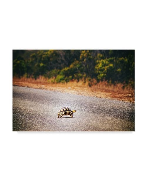 "Trademark Global Pixie Pics Desert Turtle Crossing Canvas Art - 15"" x 20"""