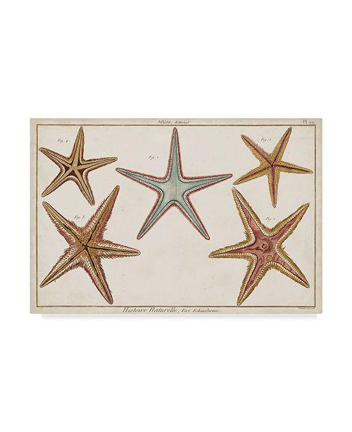 "Trademark Global Denis Diderot Starfish Naturelle I Canvas Art - 37"" x 49"""