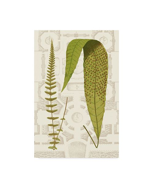 "Trademark Global Vision Studio Garden Ferns III Canvas Art - 37"" x 49"""