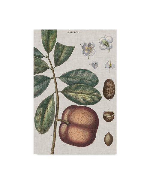 "Trademark Global Vision Studio Exotic Botanique IV Canvas Art - 20"" x 25"""
