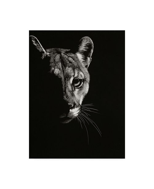 "Trademark Global Julie T. Chapman Black Glimpse IV Canvas Art - 37"" x 49"""