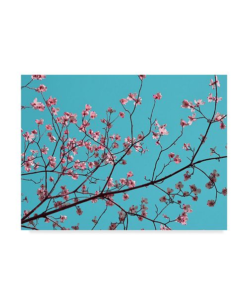 "Trademark Global Sharon Chandler Petals & Sky III Canvas Art - 20"" x 25"""