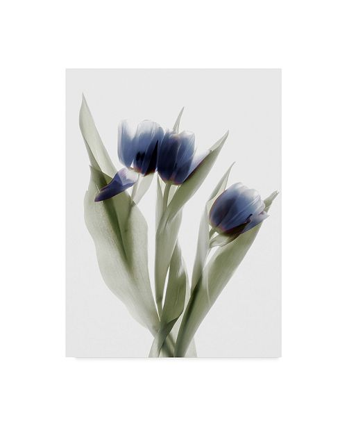 "Trademark Global Judy Stalus Xray Tulip IX Canvas Art - 20"" x 25"""