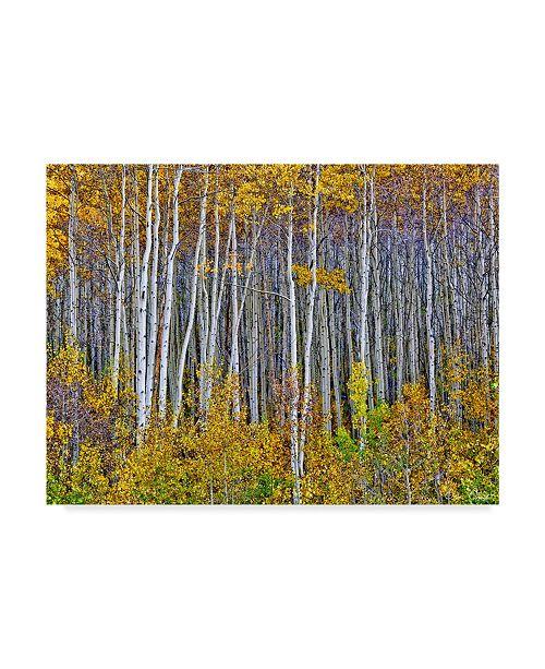 "Trademark Global David Drost Yellow Woods I Canvas Art - 15"" x 20"""