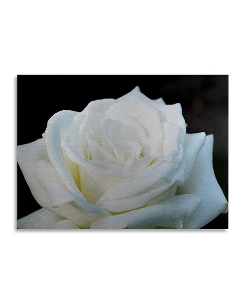 "Trademark Global Kurt Shaffer White Rose II Floating Brushed Aluminum Art - 22"" x 25"""