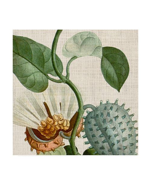 """Trademark Global Vision Studio Cropped Turpin Tropicals II Canvas Art - 20"""" x 25"""""""