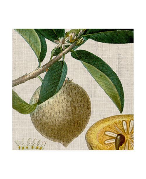 """Trademark Global Vision Studio Cropped Turpin Tropicals V Canvas Art - 15"""" x 20"""""""