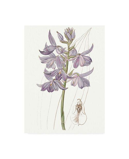 "Trademark Global Edwards Lavender Beauties III Canvas Art - 20"" x 25"""