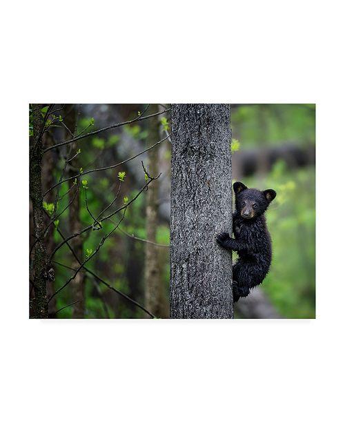 "Trademark Global PH Burchett Bears at Play VI Canvas Art - 20"" x 25"""