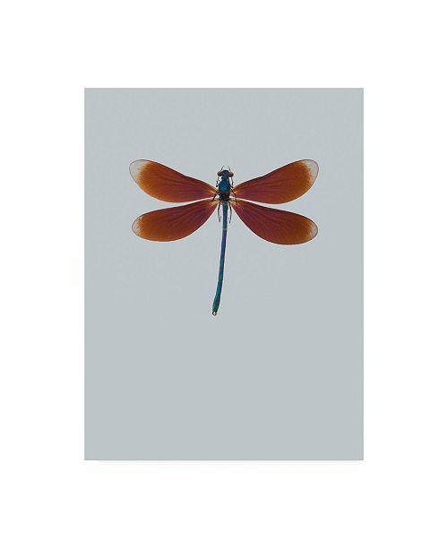 "Trademark Global Incado Dragonfly II Canvas Art - 15.5"" x 21"""