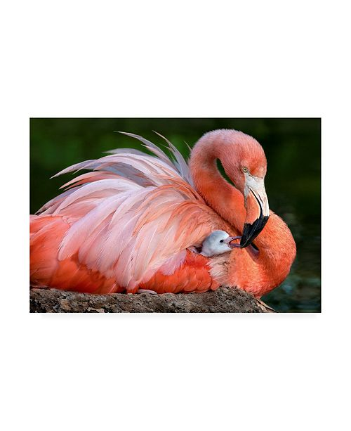 "Trademark Global Xavier Ortega Flamingo Mom with Her Chick Canvas Art - 19.5"" x 26"""