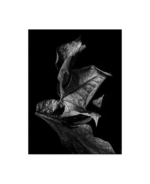 "Trademark Global Design Fabrikken Leaf Composition, Dark Fabrikken Canvas Art - 15.5"" x 21"""