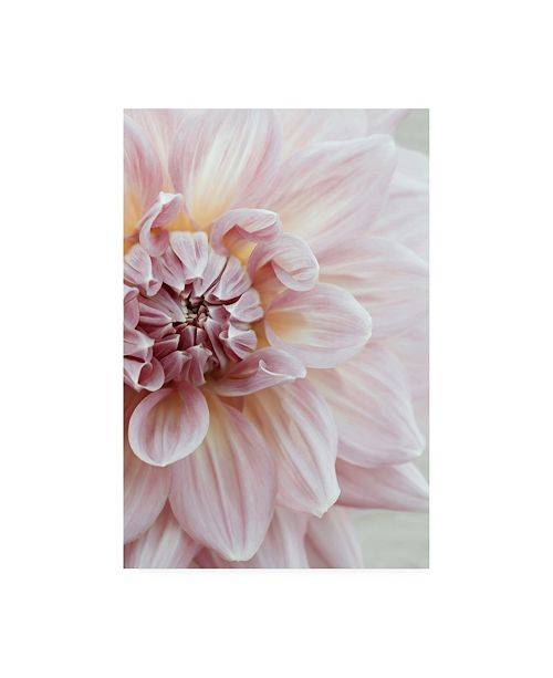 "Trademark Global Brooke T. Ryan Blush Pink Dahlia Canvas Art - 15.5"" x 21"""