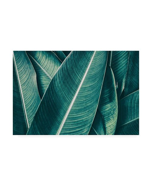 "Trademark Global PhotoINC Studio Banana Green Leaves Canvas Art - 15.5"" x 21"""