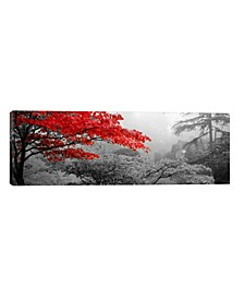 "Trees In A Garden, Butchart Gardens, Victoria, Vancouver Isl by Panoramic Images Wrapped Canvas Print - 12"" x 36"""