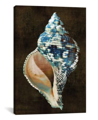 "Ocean Treasure Iii by Caroline Kelly Wrapped Canvas Print - 40"" x 26"""