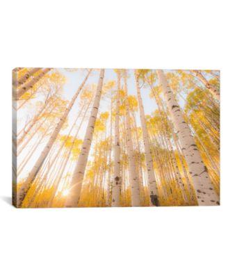 """Colorado by Dan Ballard Wrapped Canvas Print - 26"""" x 40"""""""