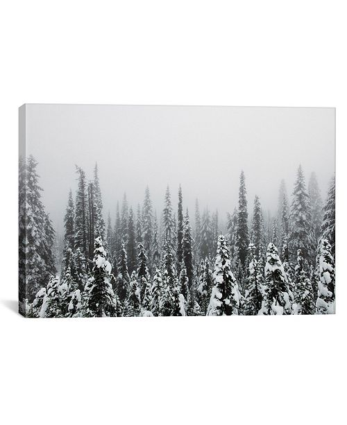 "iCanvas Trees Of Mt. Rainier by Christopher Kerksieck Wrapped Canvas Print - 40"" x 60"""