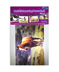 Real Photo Farm Animal Poster Set