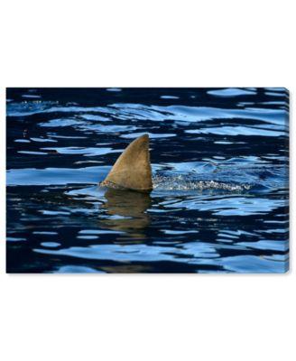 Great Whiteshark Fin, Shark Fin, Oceanshark Fin by David Fleetham Canvas Art, 36