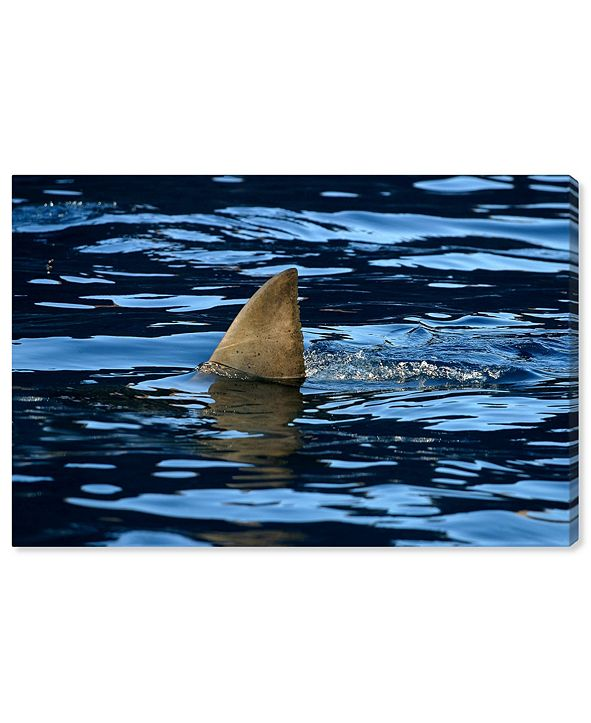 "Oliver Gal Great Whiteshark Fin, Shark Fin, Oceanshark Fin by David Fleetham Canvas Art, 15"" x 10"""