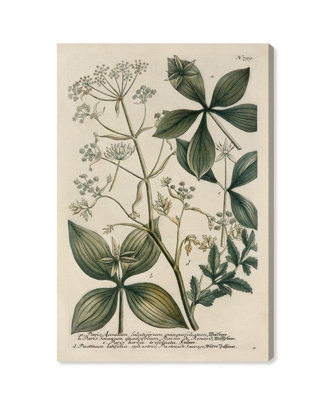 "Oliver Gal Herbs Canvas Art, 16"" x 24"""