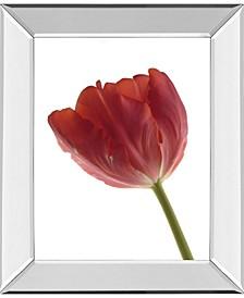 "Red Tulip by Art Photo Pro Mirror Framed Print Wall Art, 22"" x 26"""