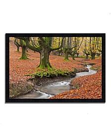"Otzarreta Beech On A Red Carpet Framed Photograph Print, 46"" x 33"""