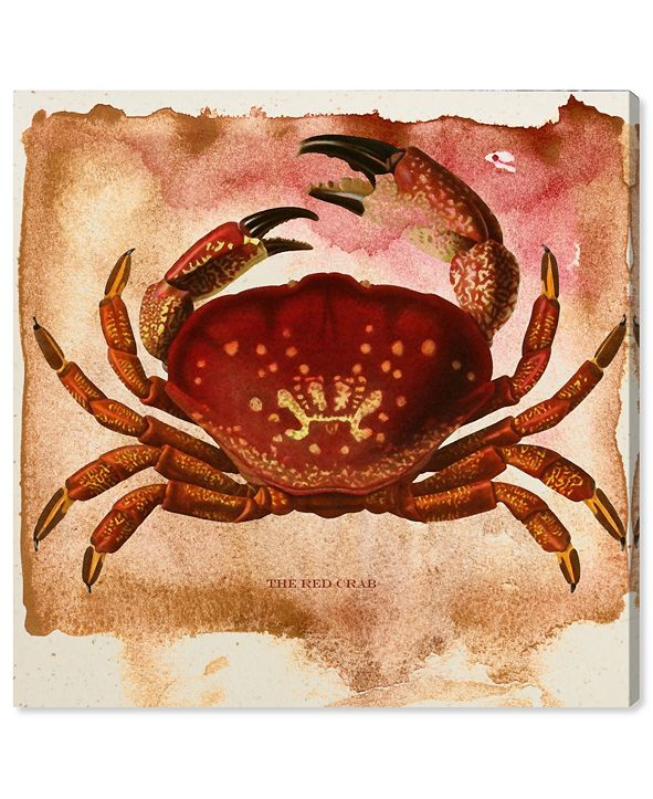 """Oliver Gal The Red Crab Canvas Art, 24"""" x 24"""""""