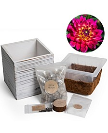 Plant Grow Self Watering Kit with Wooden Box