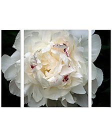 Kurt Shaffer 'Perfect Peony' Large Multi-Panel Wall Art Set