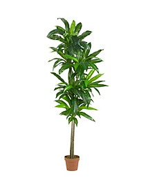 6' Dracaena Real Touch Artificial Plant