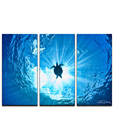 Ready2HangArt 'Sea Turtle' 3-Pc. Canvas Art Print Set