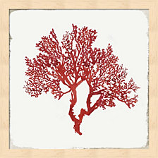 Red Coral Ii By Aimee Wilson Framed Art