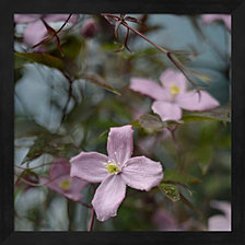 Springtime I by Sarah Gardner Framed Art