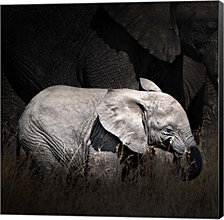 Baby Elephant II by Golie Miamee Canvas Art
