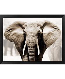 African Elephant Framed Art