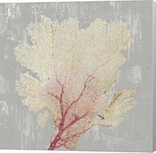 Blush Coral II by Aimee Wilson Canvas Art