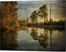 Swamp Land 1 By Wiff Harmer Canvas Art
