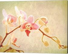 Perfume By Keri Bevan Canvas Art