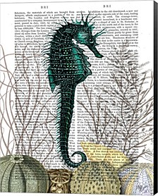 Seahorse And Sea Urchins By Fab Funky Canvas Art