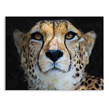 Portrait of a Cheetah, Limpopo, South Africa Printed Acrylic