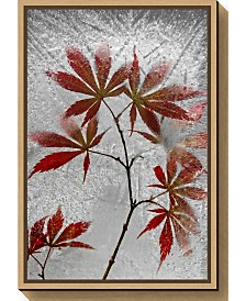 Amanti Art red maple by Secundino Losada Canvas Framed Art