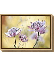 Astrantia Major by Mandy Disher Canvas Framed Art