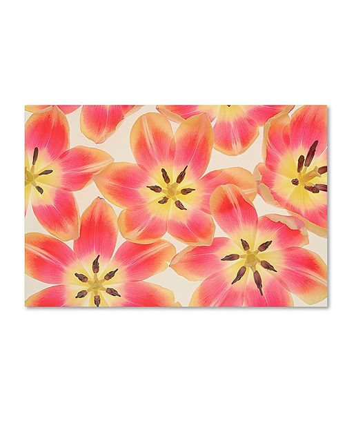 "Trademark Global Cora Niele 'Yellow and Coral Red Tulips' Canvas Art, 30"" x 47"""