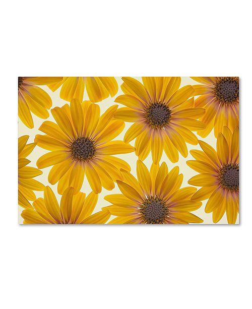 "Trademark Global Cora Niele 'Yellow Cape Daisies' Canvas Art, 12"" x 19"""